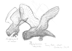 Owl in flight, sketches