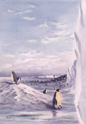 Cape Crozier - Emperor Penguins